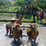 Countryside of Bali Tour